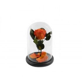 Παντοτινό Τριαντάφυλλο Αποχυμωμένο Σε Γυάλα Orange Flame Forever Rose