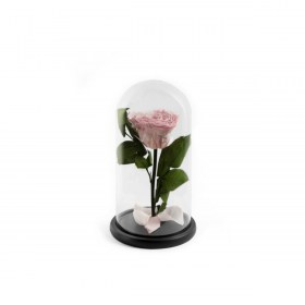 Παντοτινό Τριαντάφυλλο Καρδιά Αποχυμωμένο Σε Γυάλα  Bridal Pink Heart Forever Rose