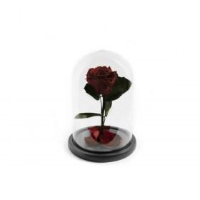 Παντοτινό Τριαντάφυλλο Αποχυμωμένο Σε Γυάλα Burgundy Forever Rose