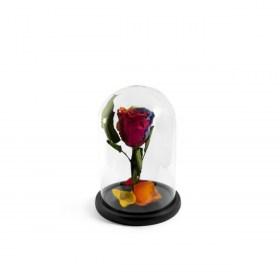 Παντοτινό Τριαντάφυλλο Αποχυμωμένο Σε Γυάλα Rainbow Forever Rose